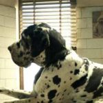 «Dogman» è il candidato italiano agli Oscar 2019